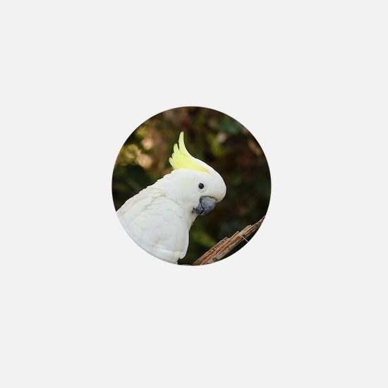 Cute Parakeets Mini Button