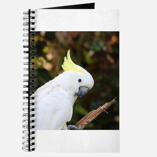 Cockatoo_2015_0504 Journal