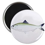 American Shad Magnets