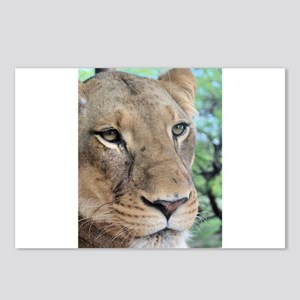 Lioness profile Postcards (Package of 8)