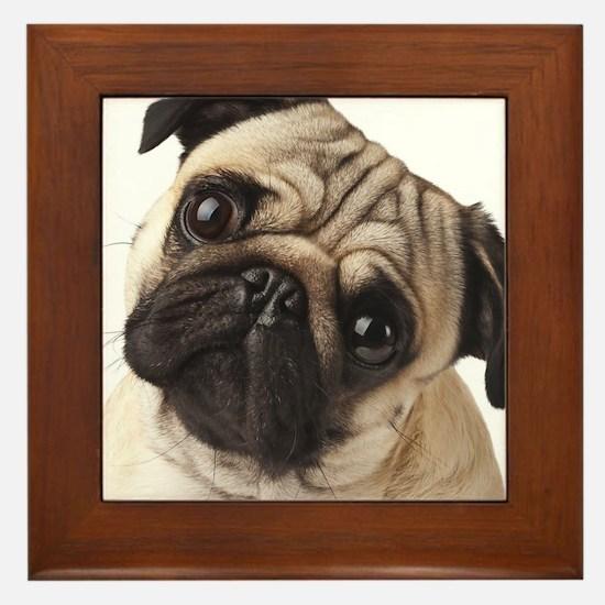 Curious Pug Framed Tile