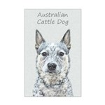 Australian Cattle Dog Mini Poster Print