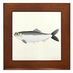 Alewife herring v2 Framed Tile