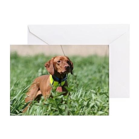Vizsla Field Dog Greeting Cards (Pk of 10)