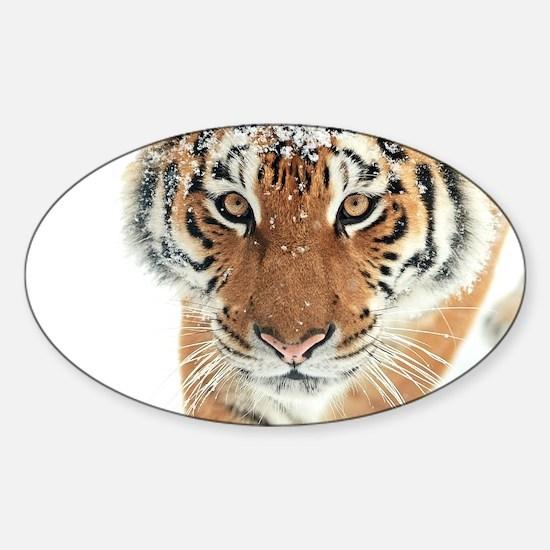 Snow Tiger Decal