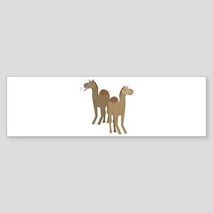 Camels Bumper Sticker