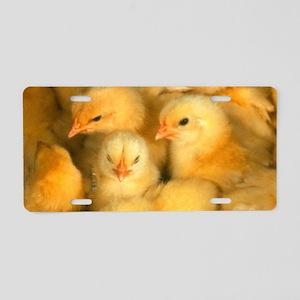 Little Yellow Chicks Aluminum License Plate