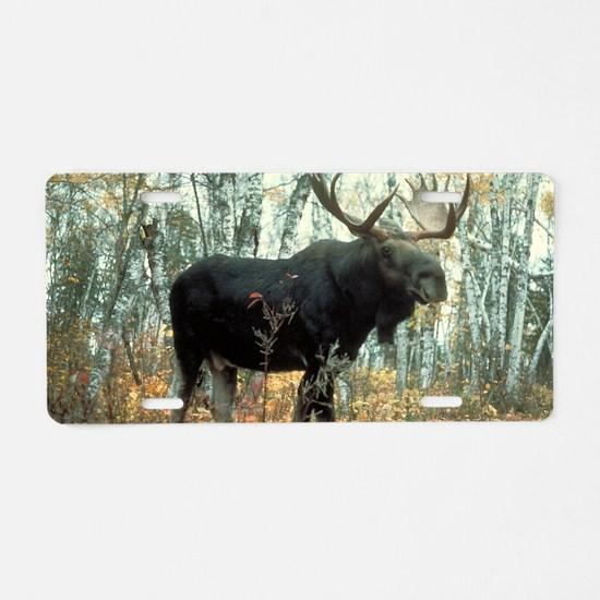 Huge Moose Aluminum License Plate