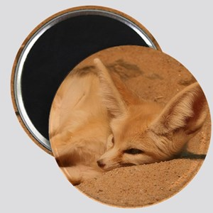 Fennec Fox Magnets