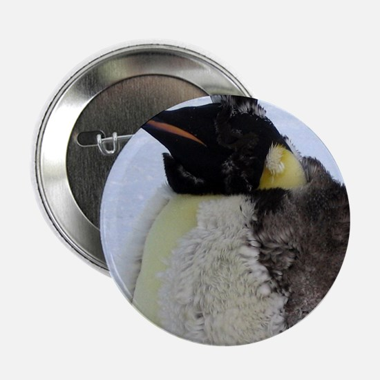 "Molting Emperor Penguin 2.25"" Button"