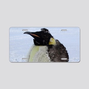 Molting Emperor Penguin Aluminum License Plate