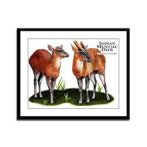 Indian Muntjac Deer Framed Panel Print