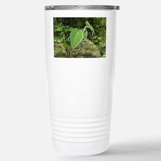Earth Leaf Dragon Stainless Steel Travel Mug