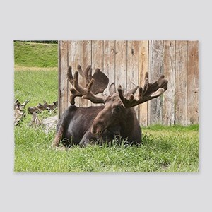 Sitting moose, Alaska, USA 5'x7'Area Rug