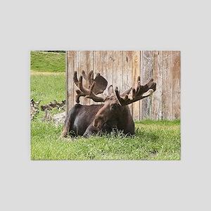 Sitting moose, Alaska, USA 5'x7'Area Rug