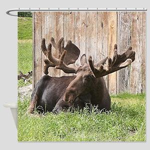 Sitting moose, Alaska, USA Shower Curtain