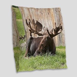 Sitting moose, Alaska, USA Burlap Throw Pillow