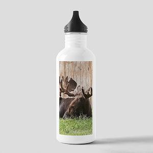 Sitting moose, Alaska, Stainless Water Bottle 1.0L