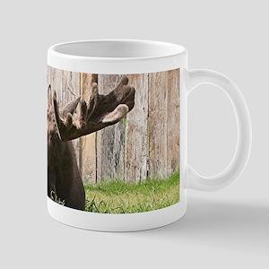 Sitting moose, Alaska, USA Mugs