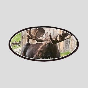 Sitting moose, Alaska, USA Patch