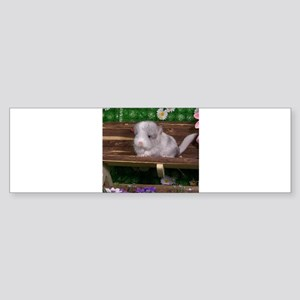 White ebony chinchilla Bumper Sticker