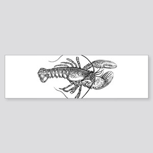 Vintage Lobster illustration Bumper Sticker