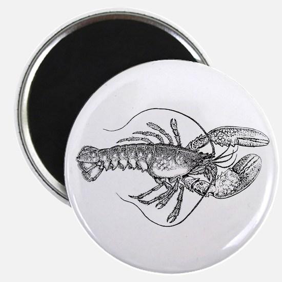 Vintage Lobster illustration Magnets
