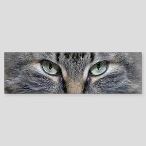 Main Coon Kitty Cat Bumper Sticker
