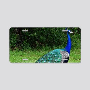 Velvet Blue Peacock Aluminum License Plate