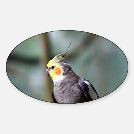 Cockatiel Sticker (Oval)
