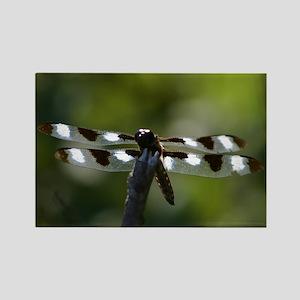 Banded Dragonfly Rectangle Magnet