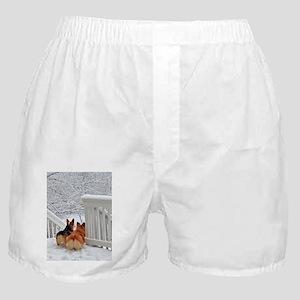 Corgis in Winter Boxer Shorts