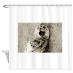 Harbor Seal Pup Shower Curtain