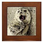 Seal Pup Close-up Framed Tile