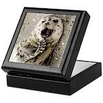 Seal Pup Close-up Keepsake Box