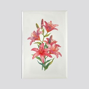 Pink Daylilies Rectangle Magnet