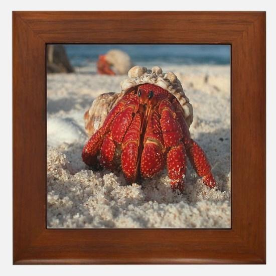 Unique Hermit crabs Framed Tile