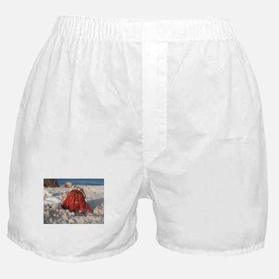 Friendly Hermit Crab Boxer Shorts