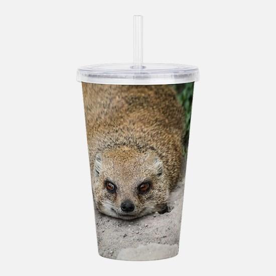 Smiling Mongoose Acrylic Double-wall Tumbler