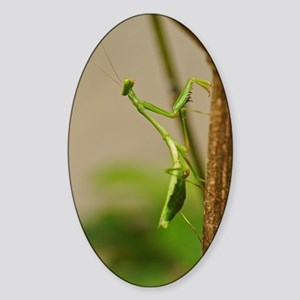 Praying Mantis Sticker (Oval)