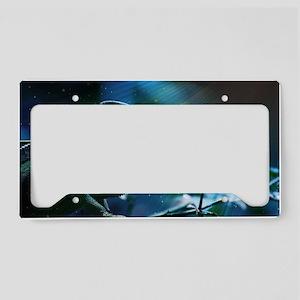 Chameleon License Plate Holder