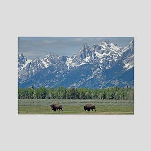 Teton Buffalo Rectangle Magnet