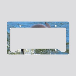 Dolphin License Plate Holder