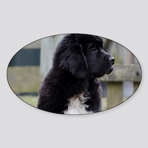 Landseer Newfie Puppy Sticker