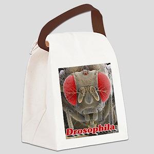 Drosophila Canvas Lunch Bag