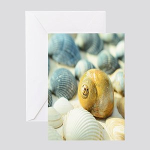 Sea Shells Greeting Cards