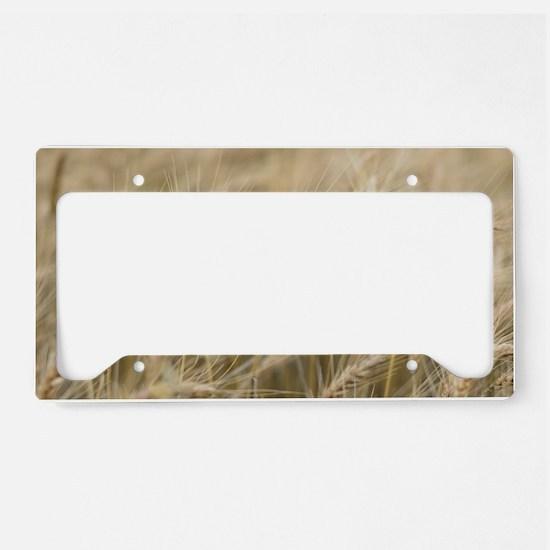 Wheat License Plate Holder