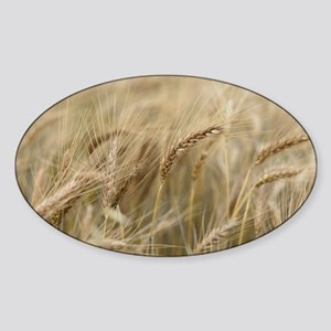 Wheat Sticker (Oval)