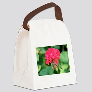 Geranium flower (red) in bloom in Canvas Lunch Bag
