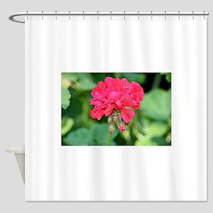 Geranium flower (red) in bloom in g Shower Curtain